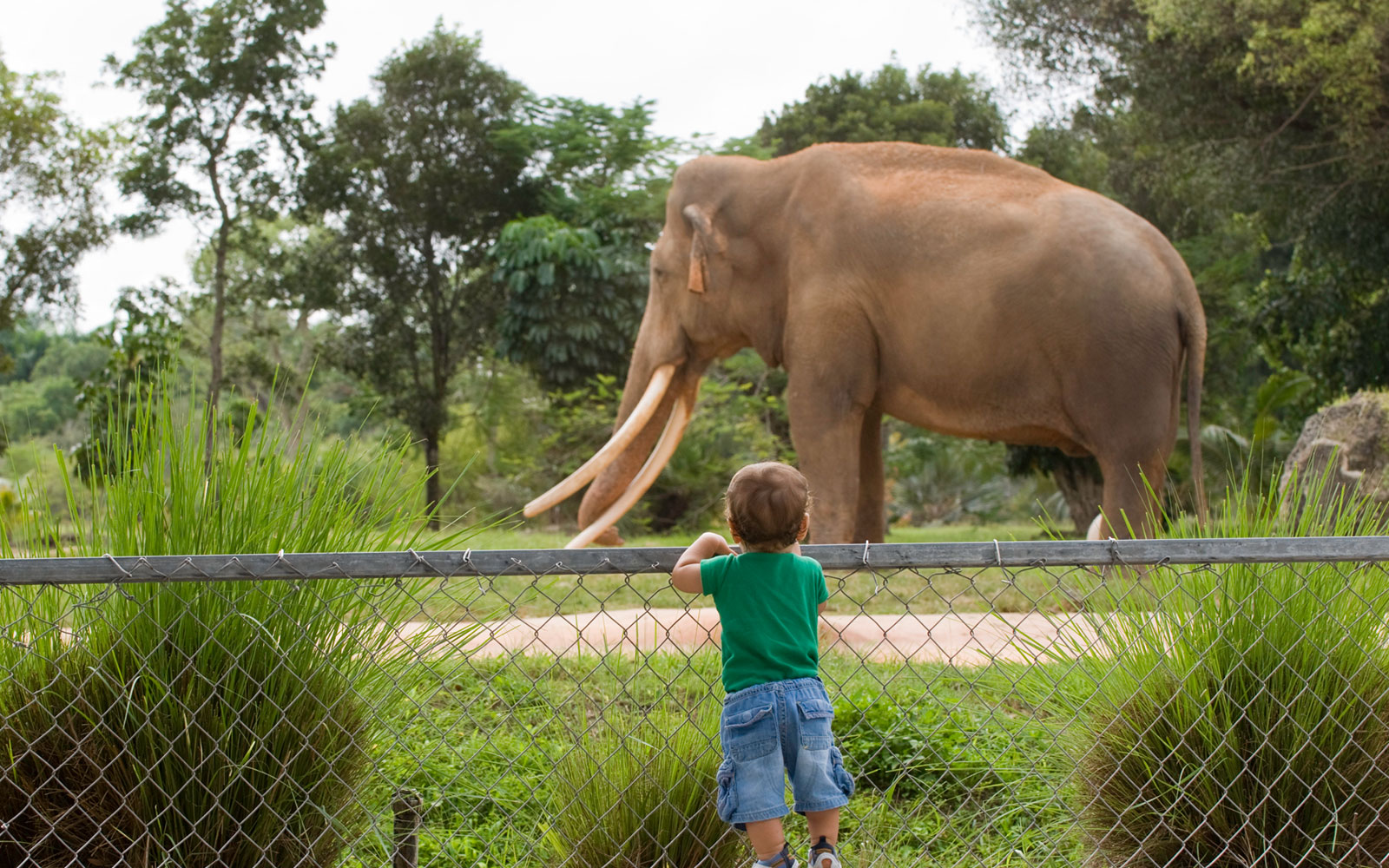 san diego zoo exotic animals and interactive experiences